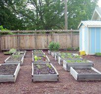 Humboldt School Learning Garden