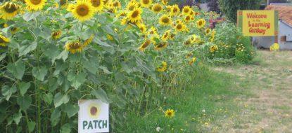 Learning Gardens Laboratory Master Plan