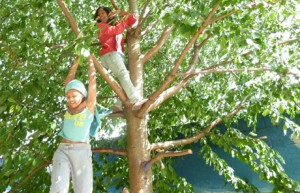 girls-climbing-a-tree