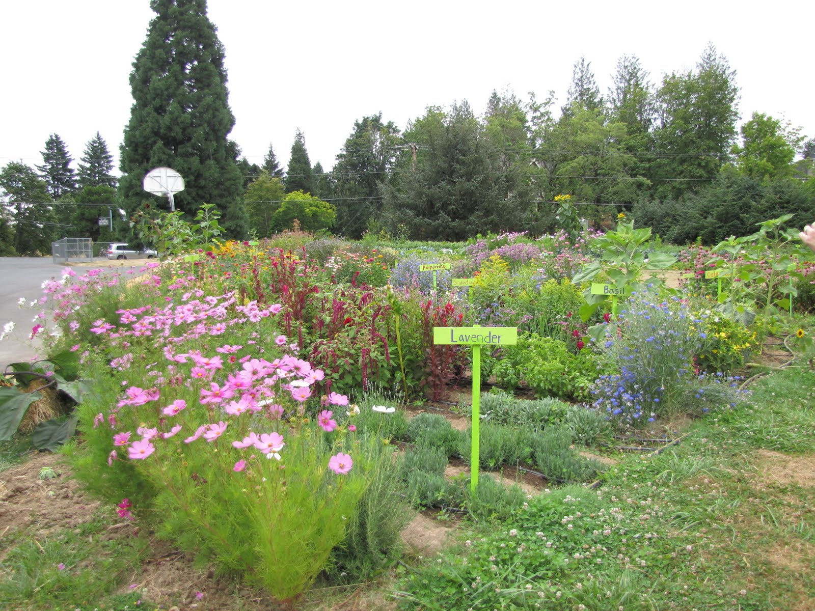 School Garden Tour - Learning Landscapes - Professional ...